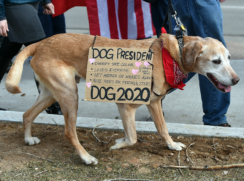 Odie, a 9 year-old Labroador, wears a sign as he walks with his owner, Dave Sites during the Marching in Solidarity with Our Immigrant and Muslim Neighbors event Tuesday, Jan. 31, 2017, on Sheilds Street and Rolland Moore Drive in Fort Collins.   (Photo by Jenny Sparks/Loveland Reporter-Herald)