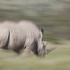 Rhino charge