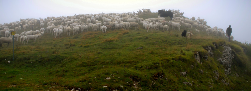 Sheep Herder Morn