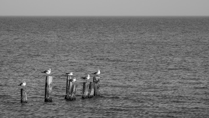 Six Seagulls in a Row