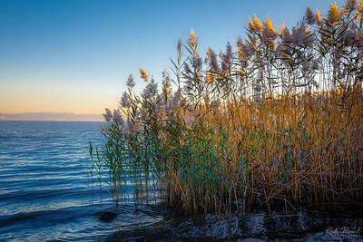 Marsh reeds along the Hudson