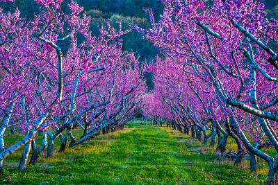 Spring revival in the orchard