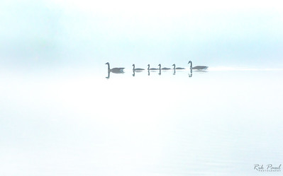 Family outing in the fog