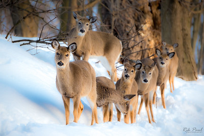 A winter outing