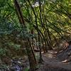 Nojoqui Falls 2581