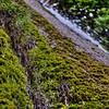 Nojoqui Falls 2571