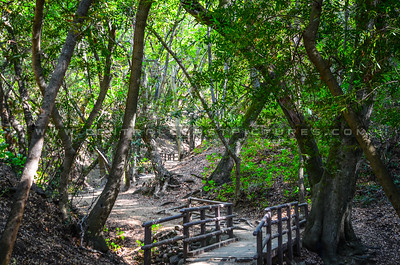 nojoqui falls stairs-5695