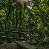 Nojoqui Falls 2623