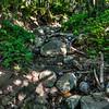 Nojoqui Falls 2491