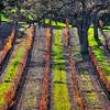 los olivos vineyard 8452-