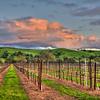santa ynez vineyard sunset 5155