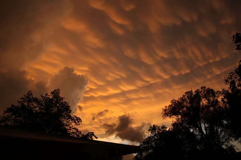 """Mammatus, also known as (meaning """"mammary cloud"""" or """"breast cloud""""), is a meteorological term applied to a cellular pattern of pouches hanging underneath the base of a cloud. The name mammatus is derived from the Latin mamma  (meaning """"udder"""" or """"breast""""), as some consider there is a resemblance between the characteristic shape of these clouds and the breast of a woman.<br /> <br /> When occurring in cumulonimbus, mammatus are often indicative of a particularly strong storm or maybe even a tornadic storm. Due to the intensely sheared environment in which mammatus form, aviators are strongly cautioned to avoid mammatus.  <br /> <br /> They can spread over hundreds of miles along a line. The individual mammatus lobe average diameters of 1–3 km and lengths on average of 0.5 km. A lobe can last an average of 10 minutes, but a whole cluster of mamma can range from 15 minutes to a few hours. <br /> <br /> They usually are composed of ice, but also can be a mixture of ice and liquid water or be composed of almost entirely liquid water.  ~Taken over Havana, IL  July 2010"""