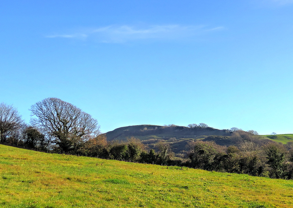 Soon after the morning break the high ramparts of Eggardon Hill come into sight