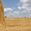 pastoral sky