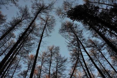 Vertigo ' trees