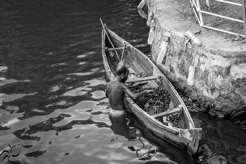 Kerala - Backwaters - Muscles fishing