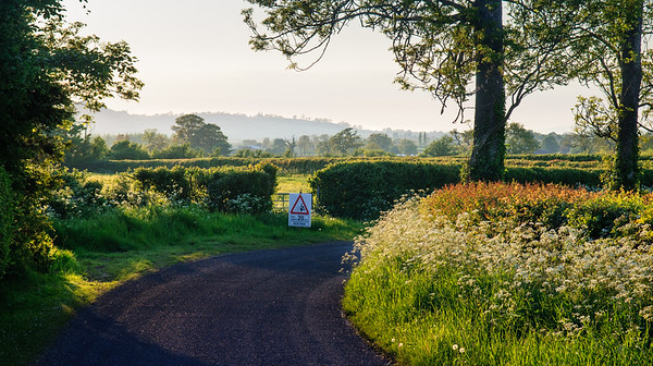 Country lane in summer