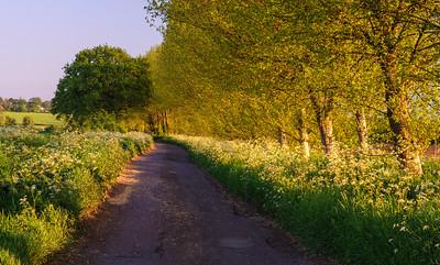 Somerset Levels lane