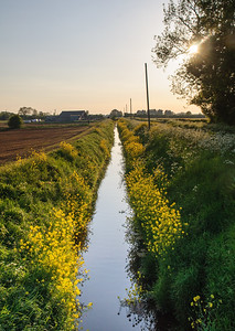 Field drains on the Somerset Levels