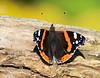 sommerfugl ps-002