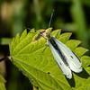sommerfugl ps-024