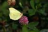 sommerfugl ps-216