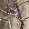 Queeny Park blue bird