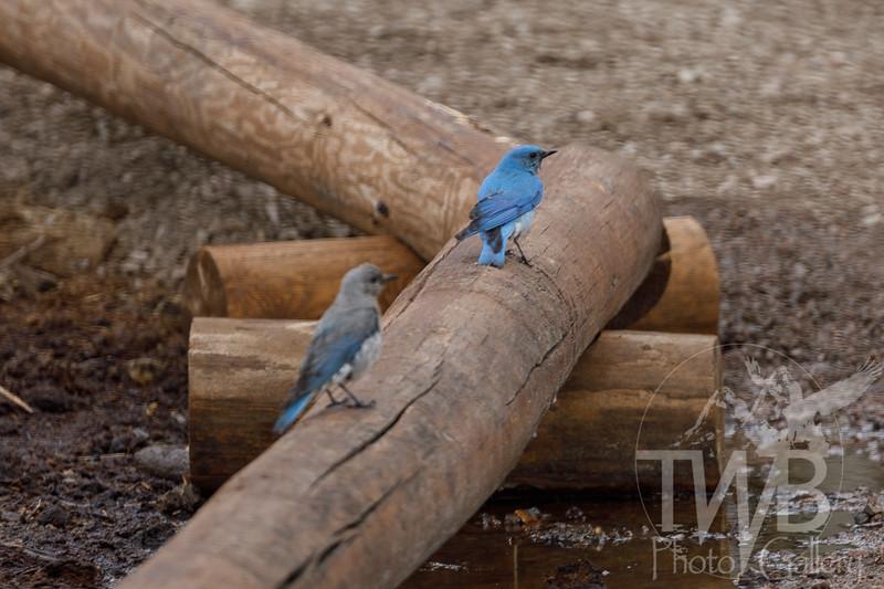 TWBPhotoGallery-0828