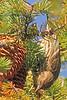 A Pine Siskin taken Sep 23, 2010 near Bozeman, MT.