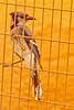 A Blue Jay taken July 20, 2011 near Carlsbad, NM.