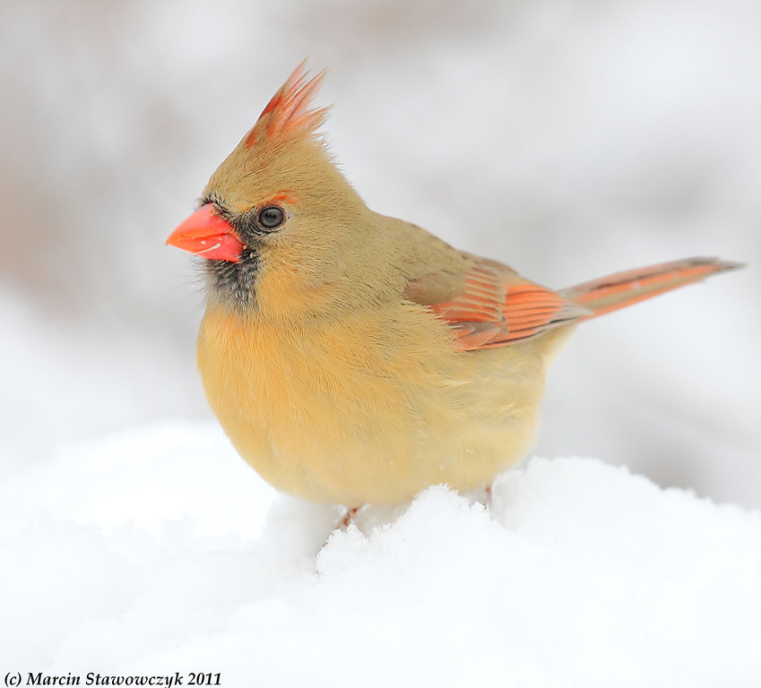 Female in the snow