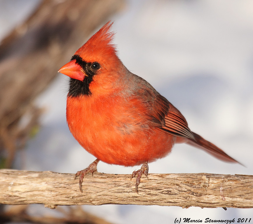Mister Red