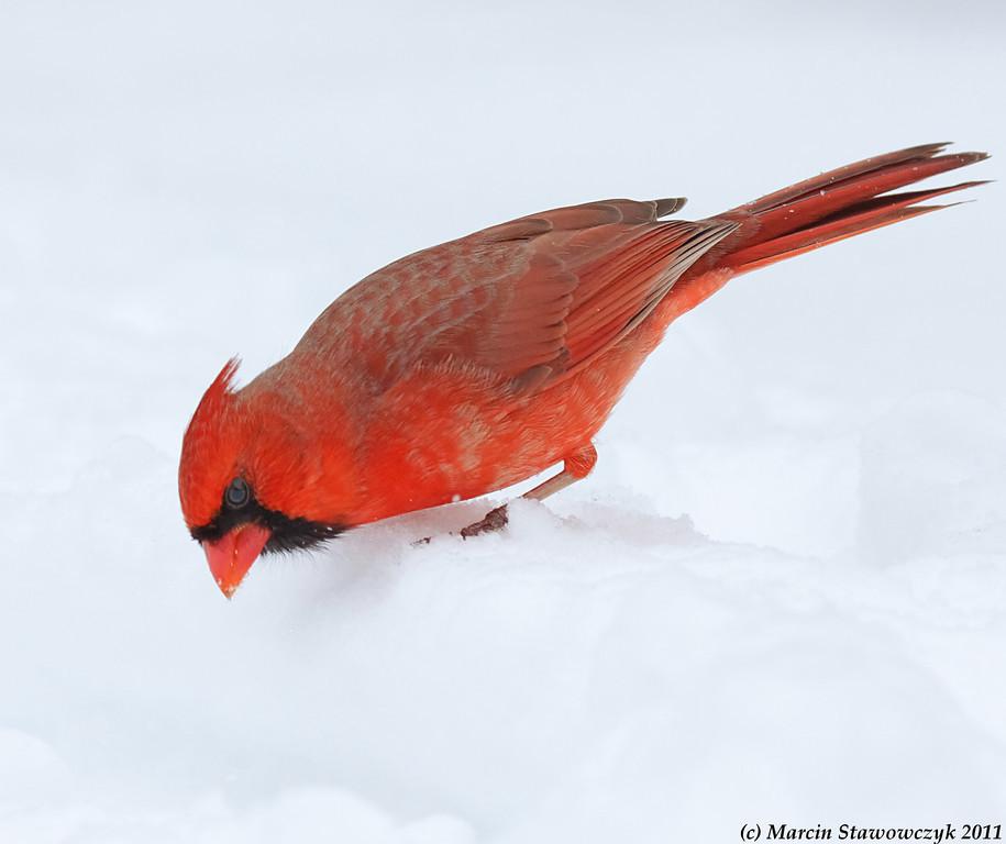 Looking into snow