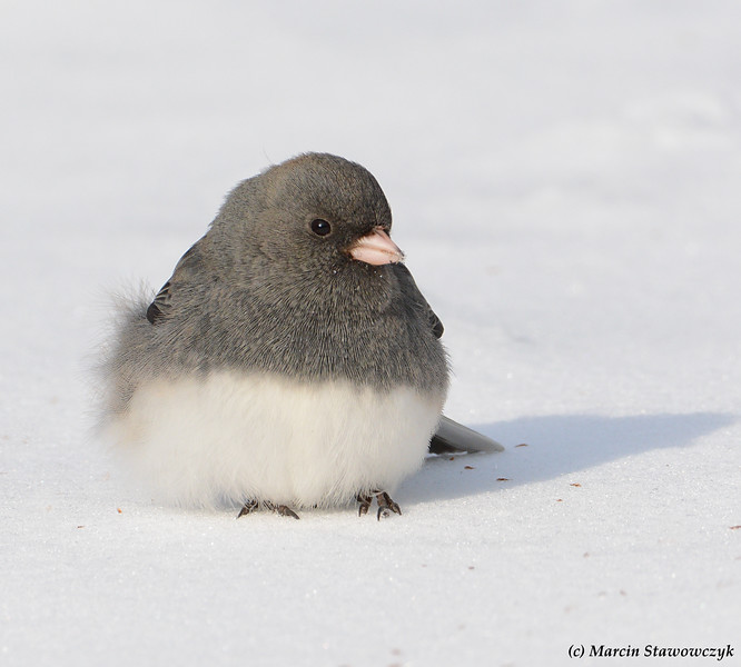 Fluffy on the snow