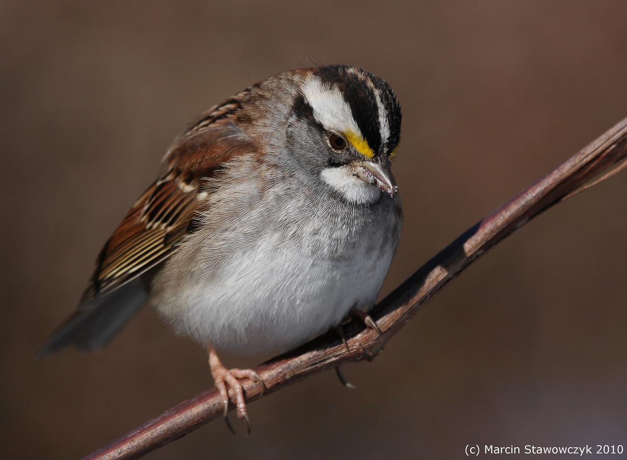 Sad sparrow