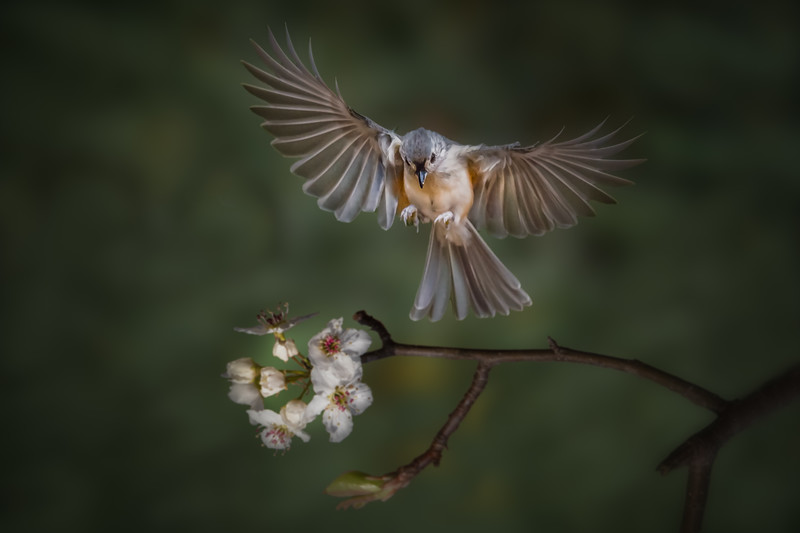 Flying Toward Spring