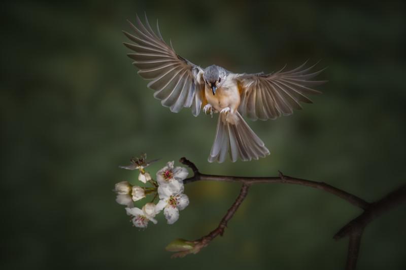 Flying Toward Spring