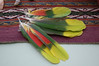 parrot feathers