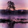 the oak tree standing in water