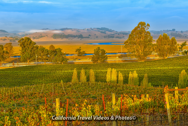 Overlooking the Petaluma River from the Keller Estate Vineyards