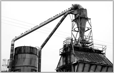 _DSC5000 Factory Pigeons