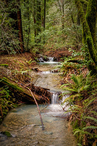 Redwoods Stream