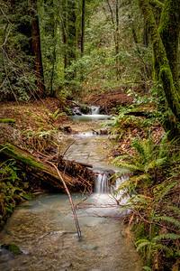 Redwoods Stream