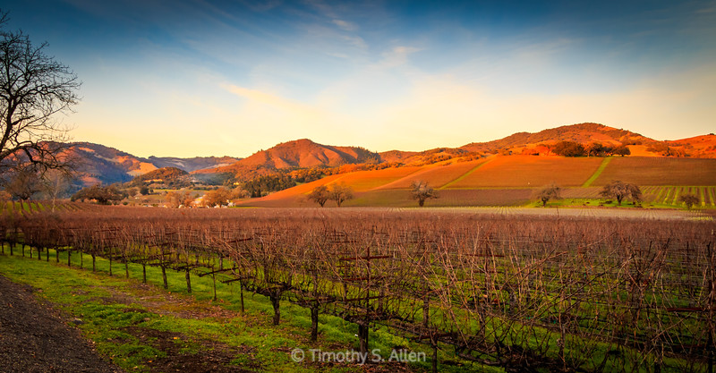 Kunde Vineyards at Sunset