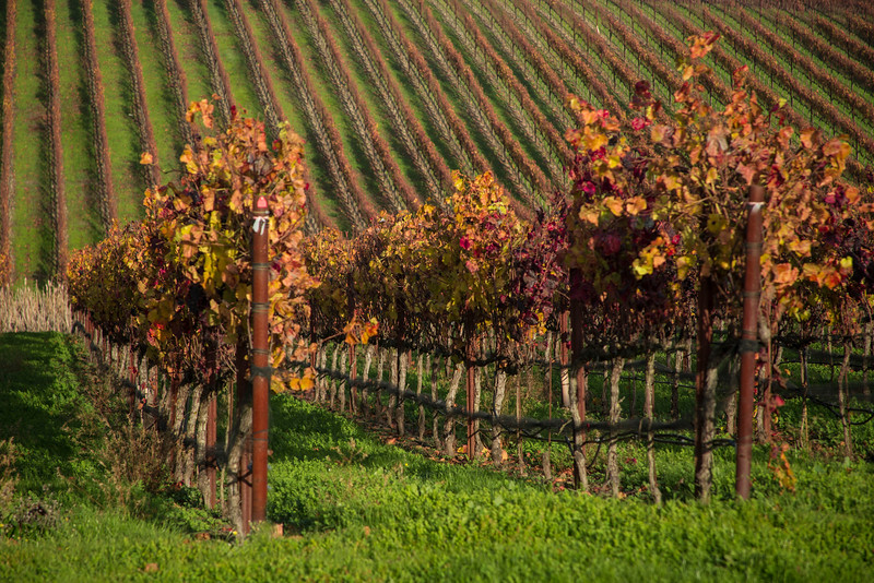 Fall in the vineyards near Crane Creek Regional Park