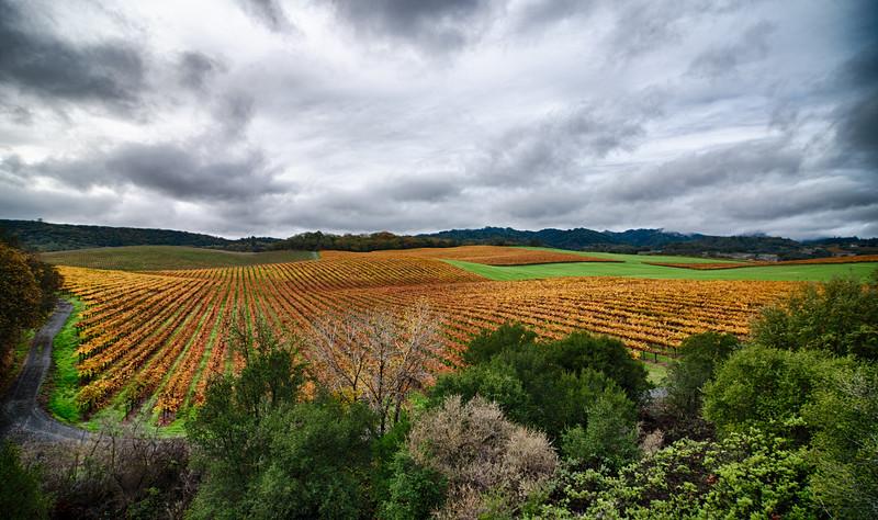 _DSC5310 Sonoma County Vineyards