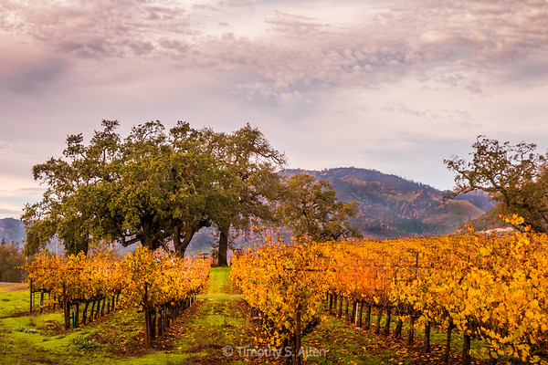 Vines in the Fall