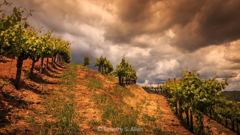 Storms Above A Dry Creek Vineyard