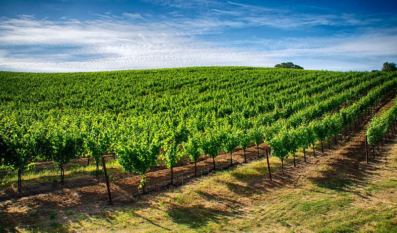 _DSC8400 Sonoma County Vineyards