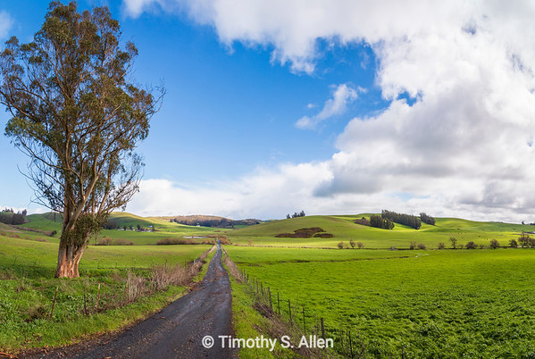 A Long Road in Green Pastures